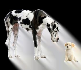 Specialty dog care Portland